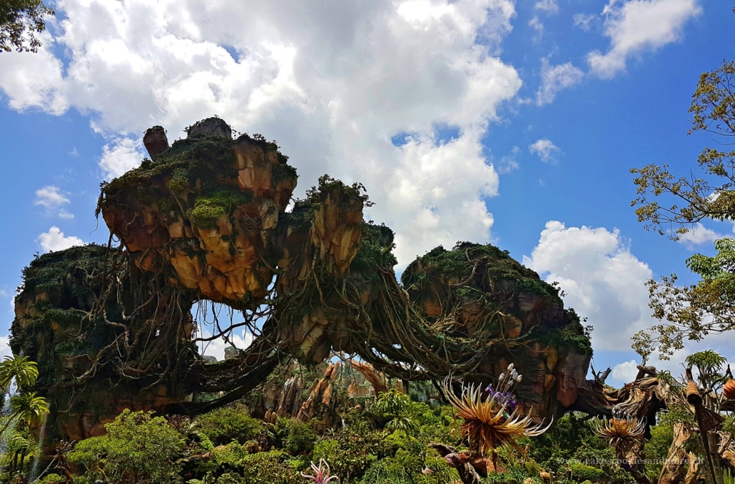 Animal Kingdom - Pandora